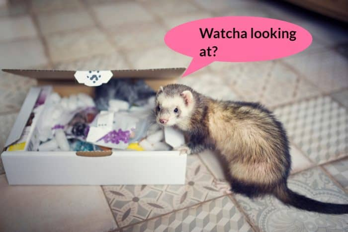 13 Best Ferret Toys + 7 Items you can