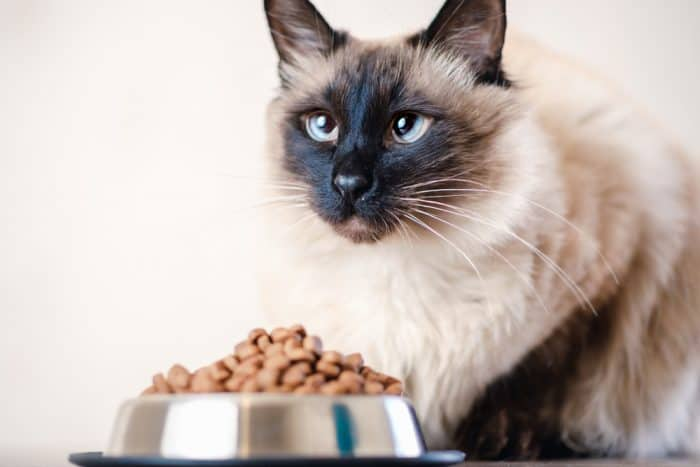 7 Best Cat Foods For Balinese Cats 2020