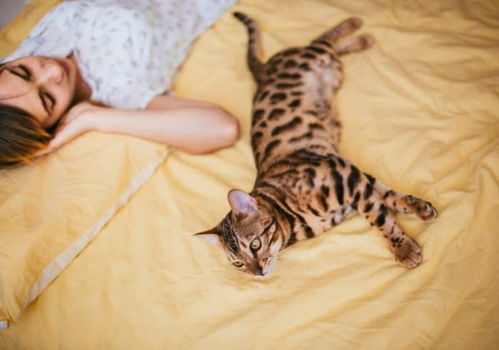 Do Bengal Cats Like To Cuddle 2020