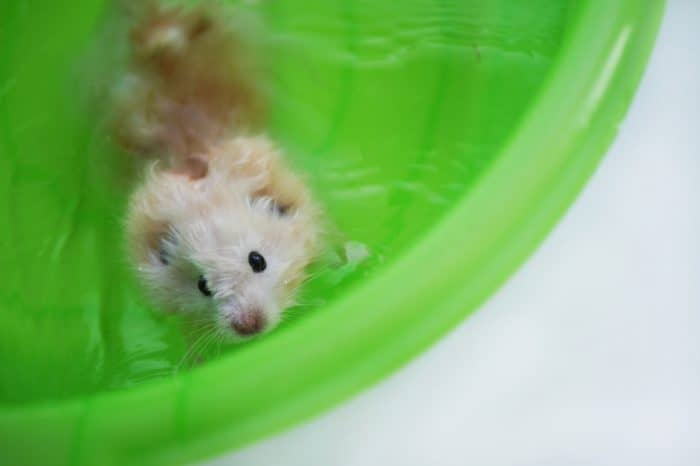 Can You Bathe a Hamster? (2019)