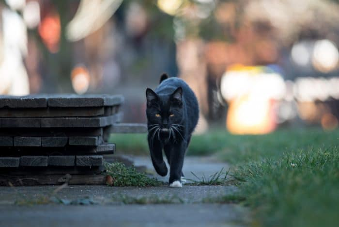 570 Badass Black Cat Names You'll Love! (2019)