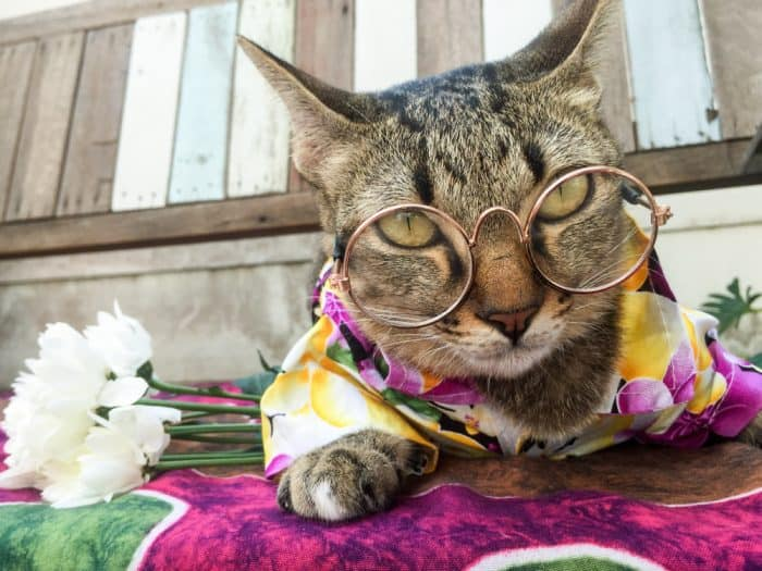 100 Cool Hawaiian Cat Names You'll Love (2019 Update)