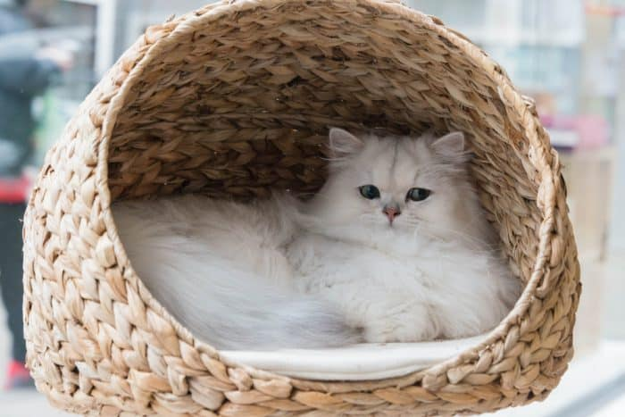 Cat Bed Plastic Pet Bed For Cats