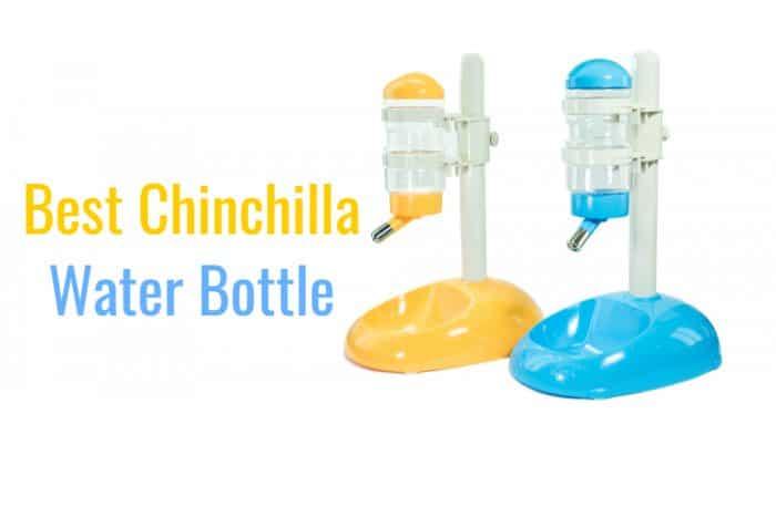 7 Best Chinchilla Water Bottles (2019)