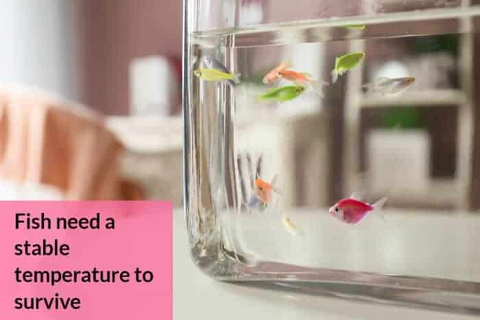 Should Aquarium Be Kept In The House