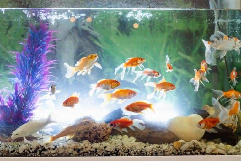 A light for you-Decor Fish