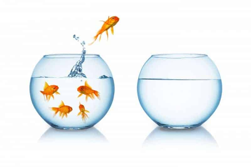 Why Do Fish Jump Out Of Water? What To Do? [ 2020 ]